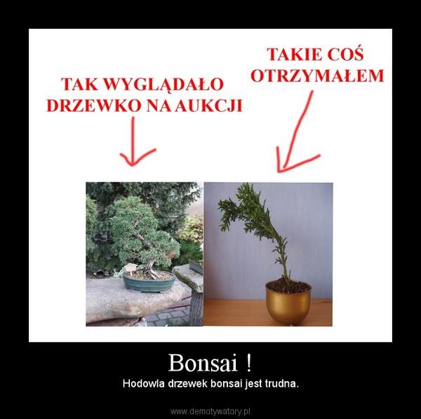 Bonsai ! – Hodowla drzewek bonsai jest trudna.