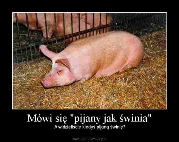 """Mówi się """"pijany jak świnia"""" –  A widzieliście kiedyś pijaną świnię?"""