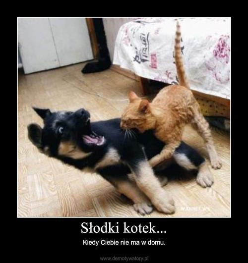 Słodki kotek...