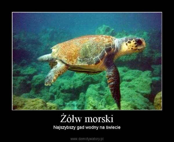 Żółw morski – Najszybszy gad wodny na świecie