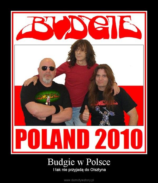 Budgie w Polsce –  I tak nie przyjadą do Olsztyna