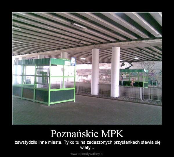 Poznańskie MPK –  zawstydziło inne miasta. Tylko tu na zadaszonych przystankach stawia sięwiaty...