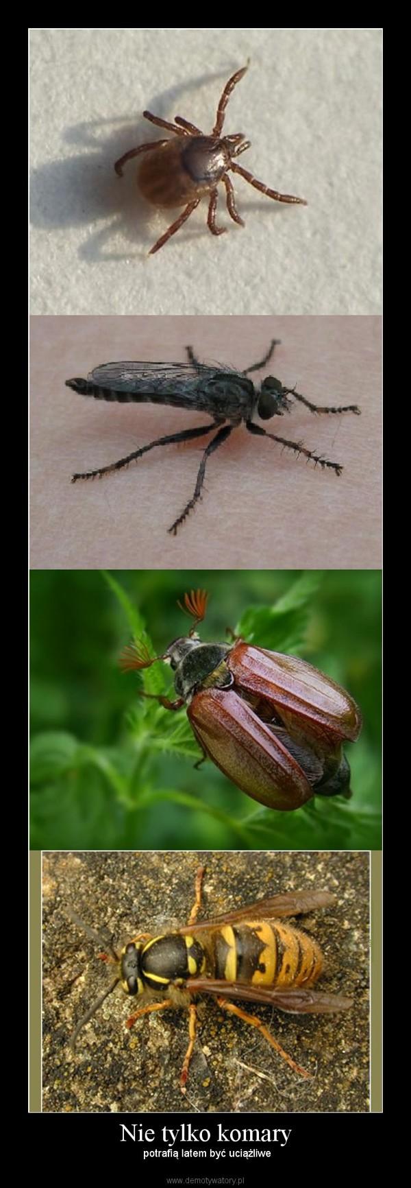 Nie tylko komary – potrafią latem być uciążliwe