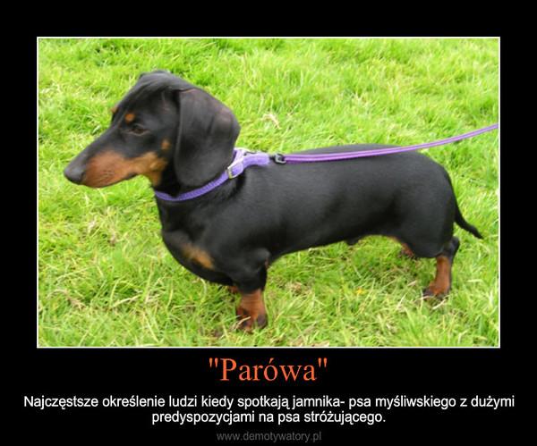 """""""Parówa"""" – Najczęstsze określenie ludzi kiedy spotkają jamnika- psa myśliwskiego z dużymi predyspozycjami na ps"""
