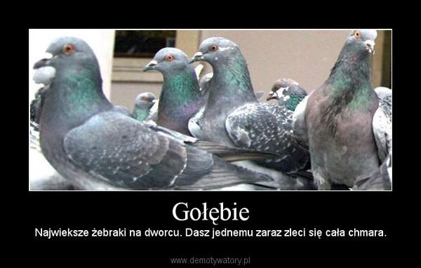 Gołębie – Najwieksze żebraki na dworcu. Dasz jednemu zaraz zleci się cała chmara.