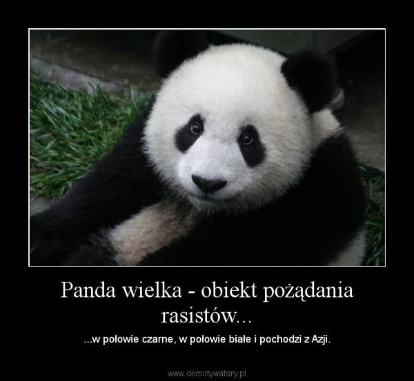 Panda wielka - obiekt pożądania rasistów... – ...w połowie czarne, w połowie białe i pochodzi z Azji.