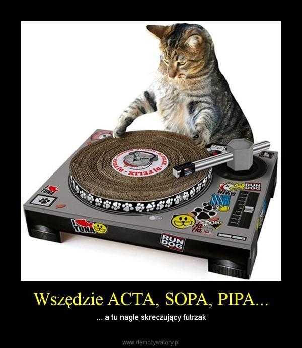Wszędzie ACTA, SOPA, PIPA... – ... a tu nagle skreczujący futrzak