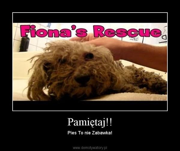Pamiętaj!! – Pies To nie Zabawka!