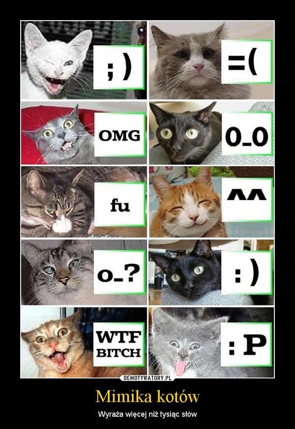 Mimika kotów – Wyraża więcej niż tysiąc słów