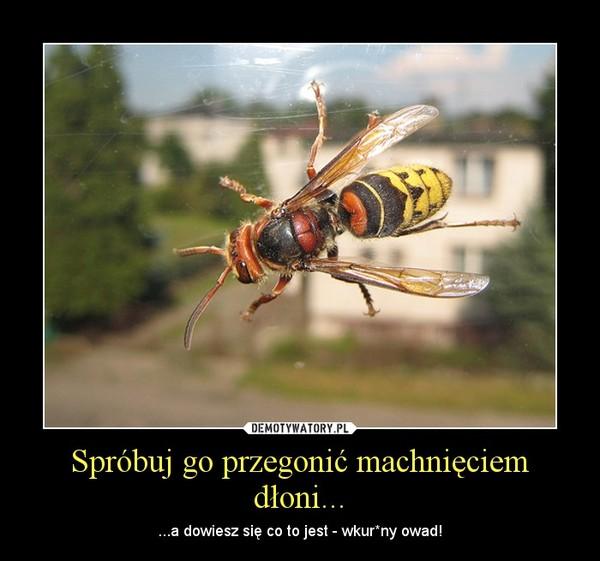 Spróbuj go przegonić machnięciem dłoni... – ...a dowiesz się co to jest - wkur*ny owad!