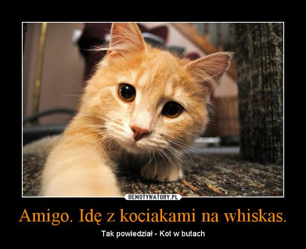 Amigo. Idę z kociakami na whiskas. – Tak powiedział - Kot w butach