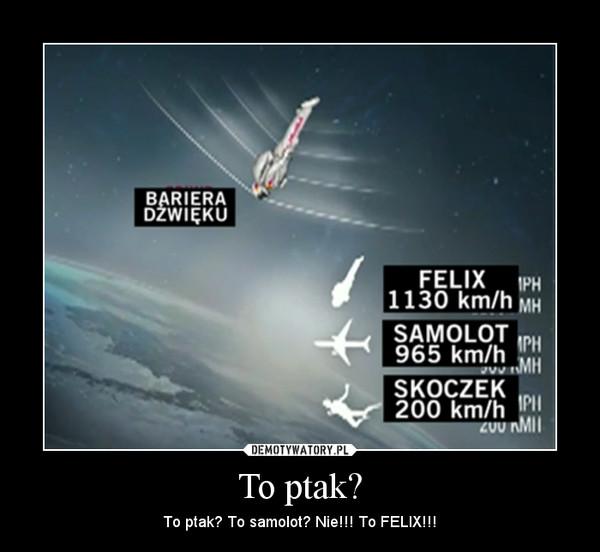 To ptak? – To ptak? To samolot? Nie!!! To FELIX!!!
