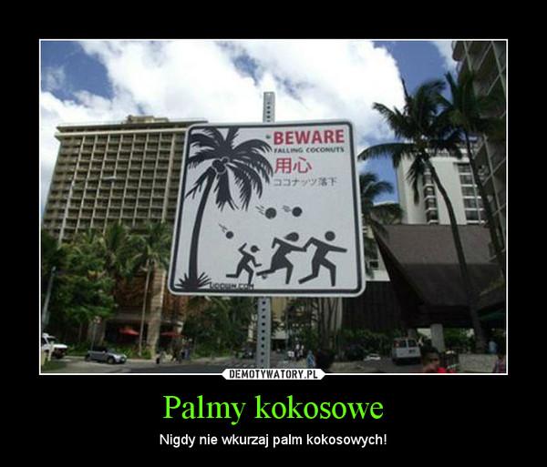 Palmy kokosowe – Nigdy nie wkurzaj palm kokosowych!
