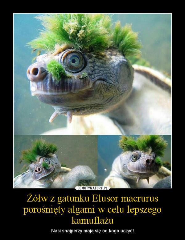 Żółw z gatunku Elusor macrurus porośnięty algami w celu lepszego kamuflażu – Nasi snajperzy mają się od kogo uczyć!