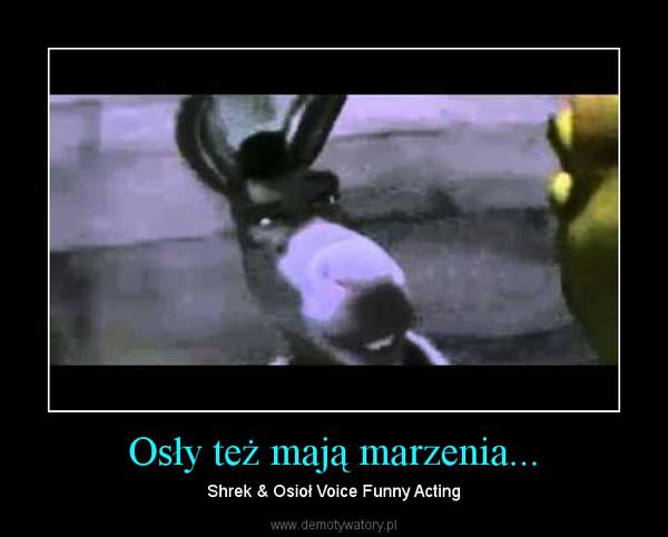 Osły też mają marzenia... – Shrek & Osioł Voice Funny Acting