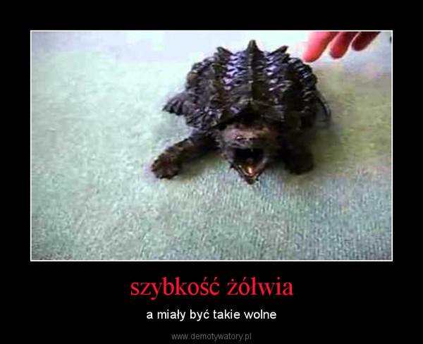 szybkość żółwia – a miały być takie wolne
