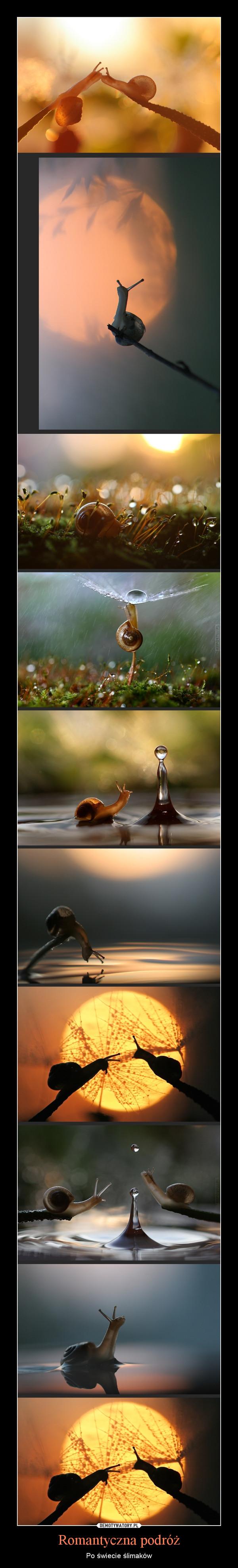 Romantyczna podróż – Po świecie ślimaków