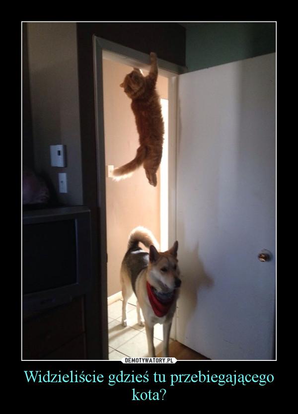 Widzieliście gdzieś tu przebiegającego kota? –