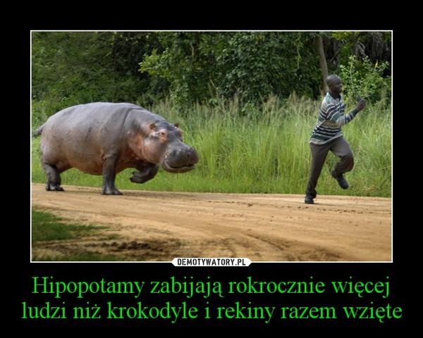 Hipopotamy zabijają rokrocznie więcej ludzi niż krokodyle i rekiny razem wzięte –