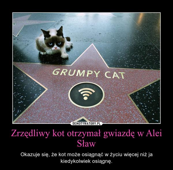 Zrzędliwy kot otrzymał gwiazdę w Alei Sław – Okazuje się, że kot może osiągnąć w życiu więcej niż ja kiedykolwiek osiągnę.