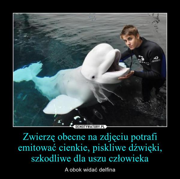 Zwierzę obecne na zdjęciu potrafi emitować cienkie, piskliwe dźwięki, szkodliwe dla uszu człowieka – A obok widać delfina
