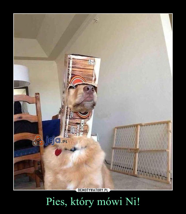 Pies, który mówi Ni! –