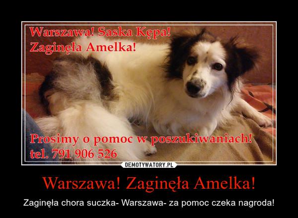 Warszawa! Zaginęła Amelka! – Zaginęła chora suczka- Warszawa- za pomoc czeka nagroda!