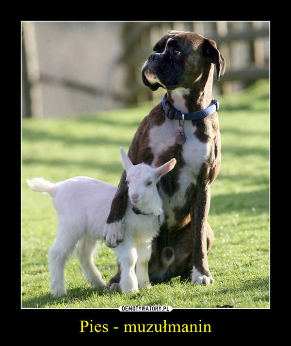 Pies - muzułmanin –