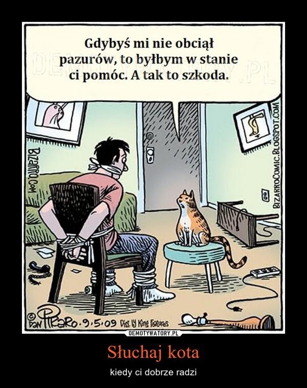 Słuchaj kota – kiedy ci dobrze radzi