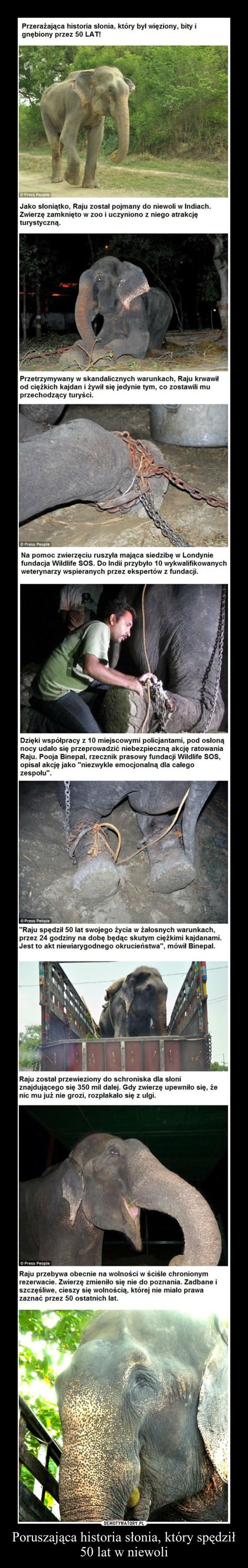 Poruszająca historia słonia, który spędził 50 lat w niewoli –