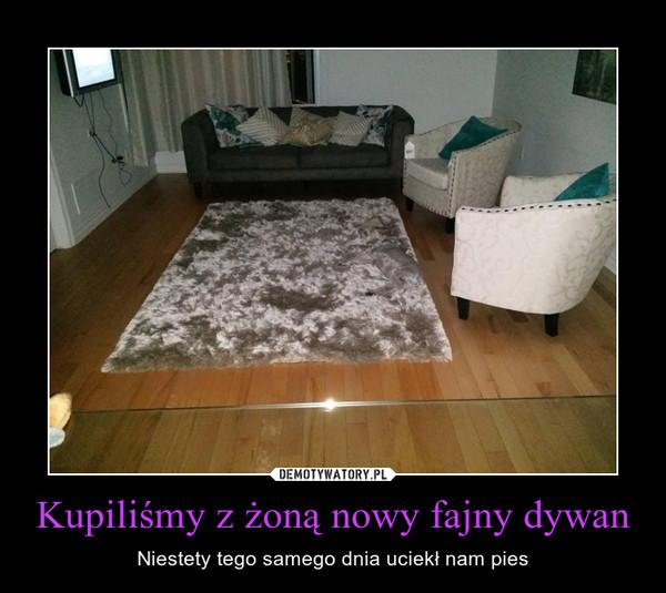 Kupiliśmy z żoną nowy fajny dywan – Niestety tego samego dnia uciekł nam pies