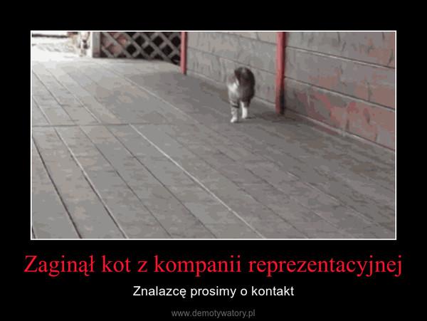 Zaginął kot z kompanii reprezentacyjnej – Znalazcę prosimy o kontakt