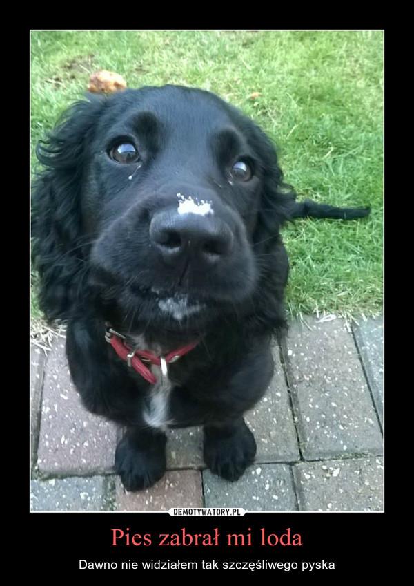 Pies zabrał mi loda – Dawno nie widziałem tak szczęśliwego pyska