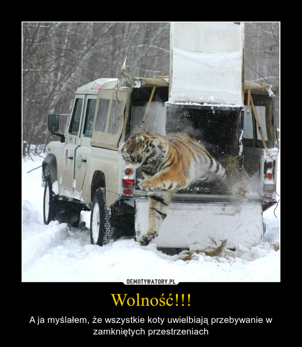 Wolność!!! – A ja myślałem, że wszystkie koty uwielbiają przebywanie w zamkniętych przestrzeniach