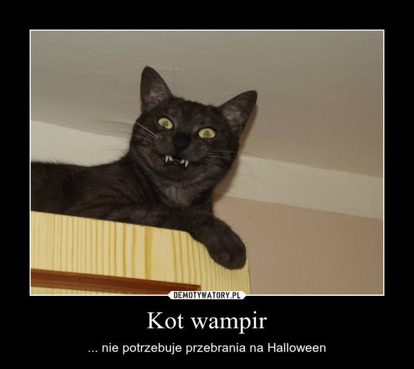 Kot wampir – ... nie potrzebuje przebrania na Halloween