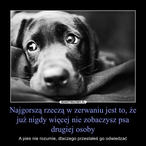 Najgorszą rzeczą w zerwaniu jest to, że już nigdy więcej nie zobaczysz psa drugiej osoby – A pies nie rozumie, dlaczego przestałeś go odwiedzać