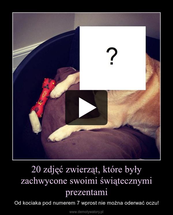 20 zdjęć zwierząt, które były zachwycone swoimi świątecznymi prezentami – Od kociaka pod numerem 7 wprost nie można oderwać oczu!