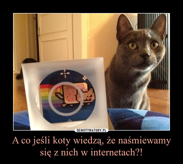 A co jeśli koty wiedzą, że naśmiewamy się z nich w internetach?! –