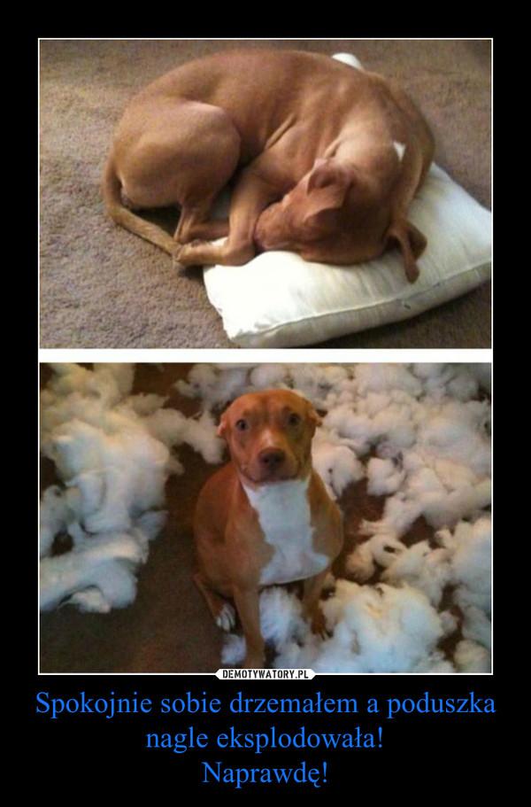 Spokojnie sobie drzemałem a poduszka nagle eksplodowała!Naprawdę! –