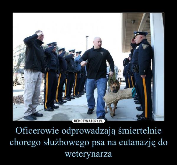 Oficerowie odprowadzają śmiertelnie chorego służbowego psa na eutanazję do weterynarza –