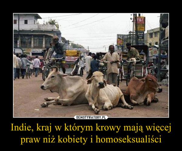 Indie, kraj w którym krowy mają więcej praw niż kobiety i homoseksualiści –
