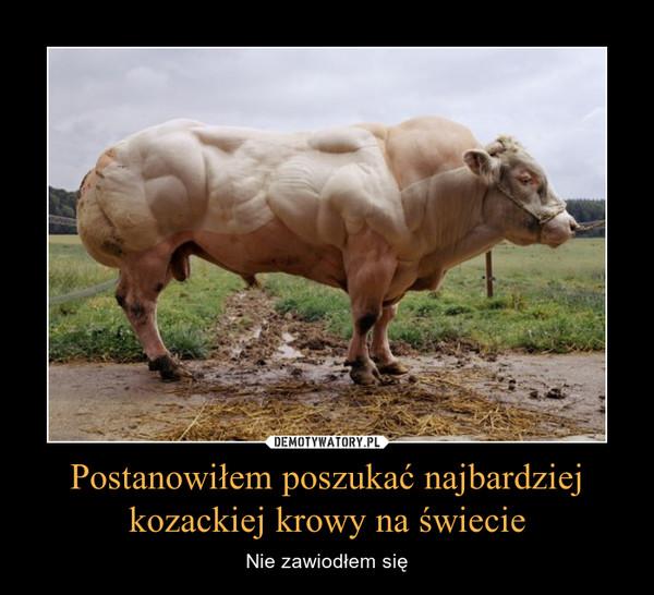 Postanowiłem poszukać najbardziej kozackiej krowy na świecie – Nie zawiodłem się