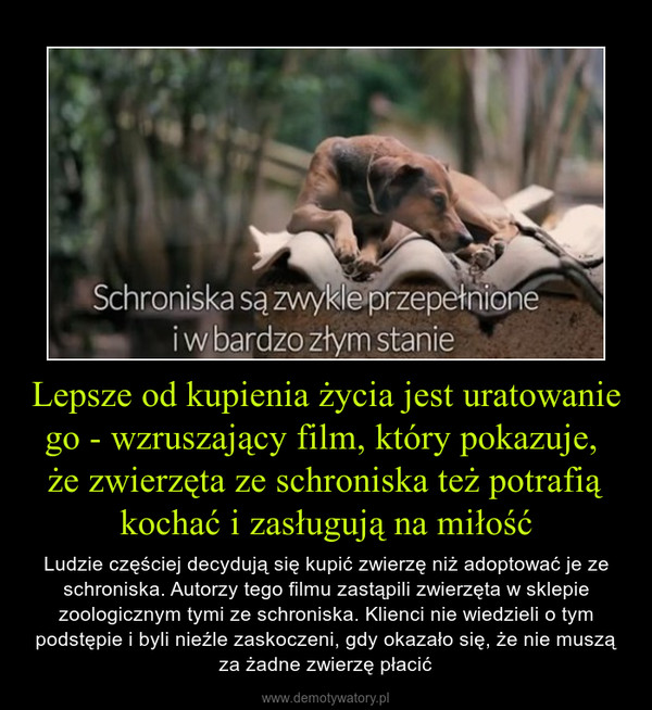 Lepsze od kupienia życia jest uratowanie go - wzruszający film, który pokazuje, że zwierzęta ze schroniska też potrafią kochać i zasługują na miłość – Ludzie częściej decydują się kupić zwierzę niż adoptować je ze schroniska. Autorzy tego filmu zastąpili zwierzęta w sklepie zoologicznym tymi ze schroniska. Klienci nie wiedzieli o tym podstępie i byli nieźle zaskoczeni, gdy okazało się, że nie muszą za żadne zwierzę płacić