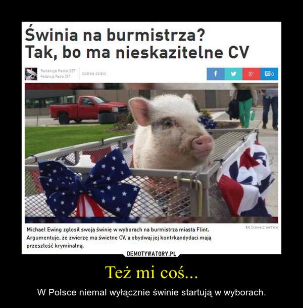 Też mi coś... – W Polsce niemal wyłącznie świnie startują w wyborach.
