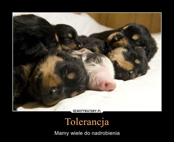 Tolerancja – Mamy wiele do nadrobienia