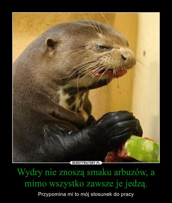 Wydry nie znoszą smaku arbuzów, a mimo wszystko zawsze je jedzą. – Przypomina mi to mój stosunek do pracy