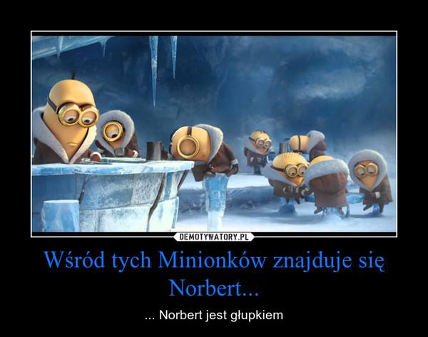 Wśród tych Minionków znajduje się Norbert... – ... Norbert jest głupkiem