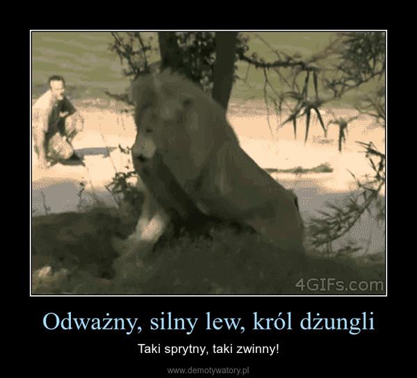 Odważny, silny lew, król dżungli – Taki sprytny, taki zwinny!