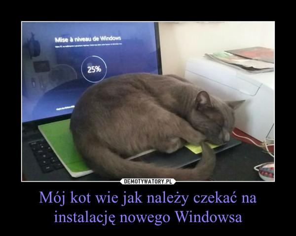 Mój kot wie jak należy czekać na instalację nowego Windowsa –