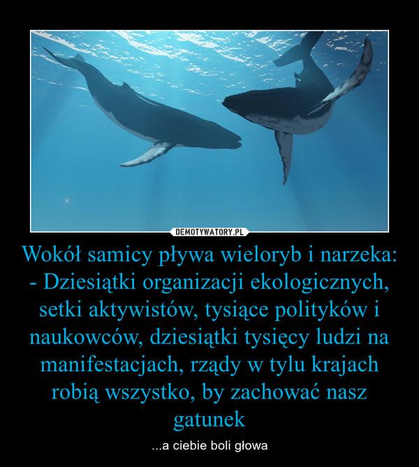 Wokół samicy pływa wieloryb i narzeka:- Dziesiątki organizacji ekologicznych, setki aktywistów, tysiące polityków i naukowców, dziesiątki tysięcy ludzi na manifestacjach, rządy w tylu krajach robią wszystko, by zachować nasz gatunek – ...a ciebie boli głowa